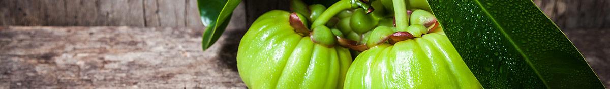 heading image for gancinia cambogia showing garcinia cambogia plant