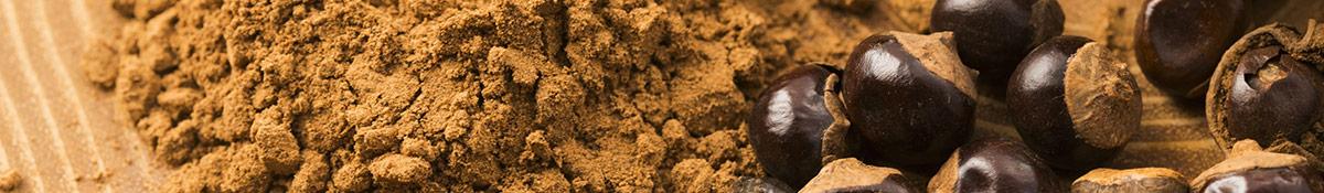 Heading Image for Guarana showing guarana powder and fruits