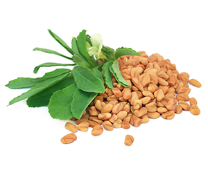 What is fenugreek?