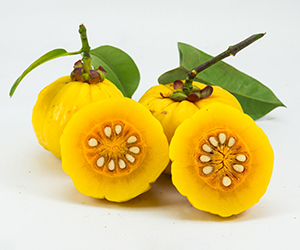 What is Garcinia Cambogia?