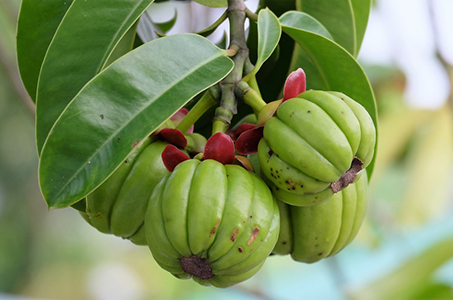 garcinia cambogia which stimulates the hormones in your brain that are associated with hunger
