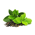 Green Tea Extract which is an active ingredient in carb no
