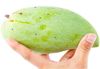 image showing hand holding a wild African mango to show the fruit