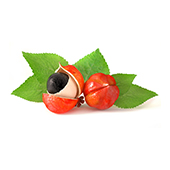 guarana which is known for containing up to four times the caffeine of coffee beans