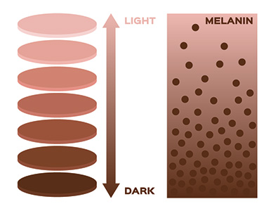 infographic showing how the supplements work in terms of melanin