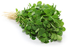 image of fenugreek also known as Methi leaves from a fenugreek plant