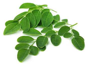 moringa leaves which has essential proteins, vitamins and minerals
