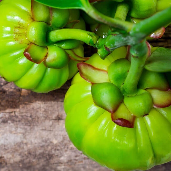 two garcinia cambogia plants to introduce the benefits