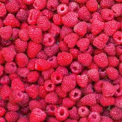 raspberries to represent benefits of raspberry ketones
