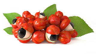 image of Guarana fruit which comes from a perennial shrub