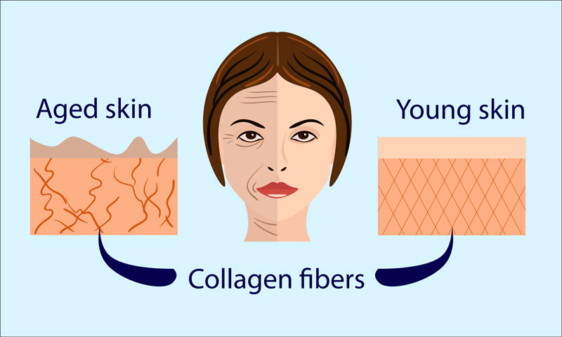 infographic showing how collagen can help prevent aging in skin