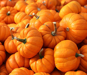 number of pumpkins used as a great source of vitamin c