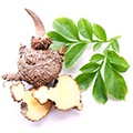 root of the konjac plant Glucomannan for appititle suppression