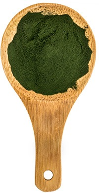 image of a wooden spoon with spirulina powder in it