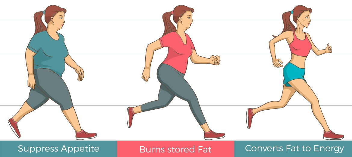 infographic showing the different stages of weight loss