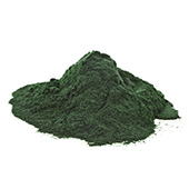 image of Chlorella which is a true superfood and is actually an amazing algae
