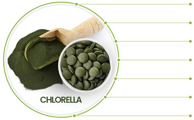 spoon full of bio chlorella algae powder and cup of chlorella algae tablets