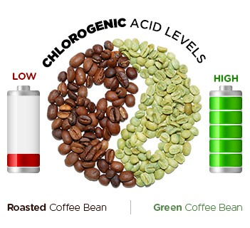 infographic showing a comparison between roasted coffee beans and green coffee beans