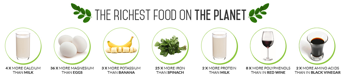 infographic on the richest foods in the work in terms of nutrients