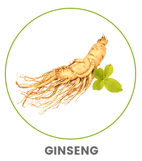 image of a ginseng ginger root plant to show benefits