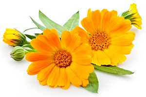 Image of Yellow Flowers to show how stretch marks cream worka