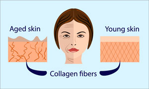 infographic showing how the effect of collagen on youthfullness on the skin